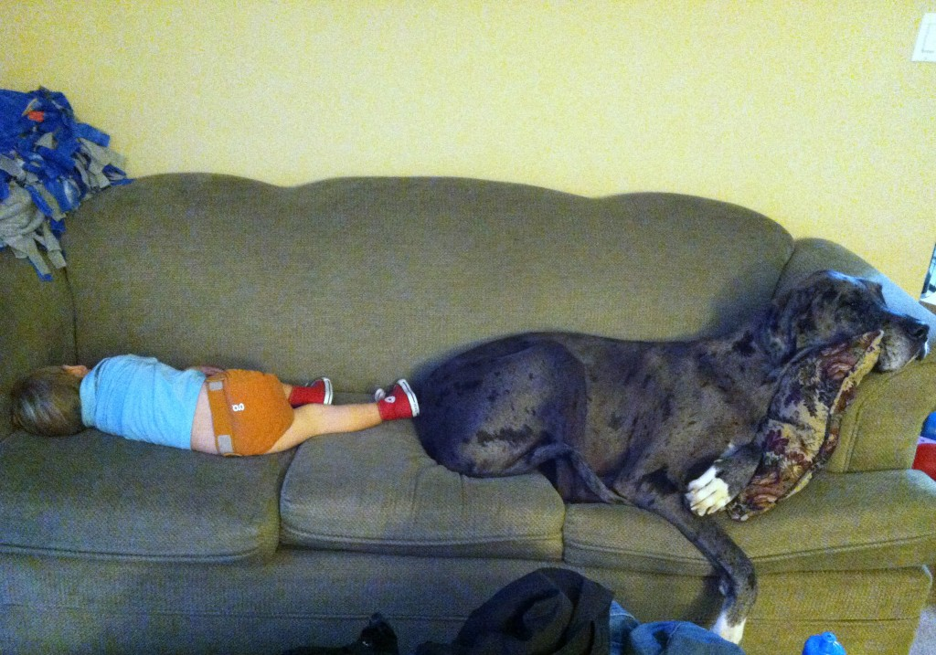 Guest Napper #29 Redux – Cuddly Couch Potatoes