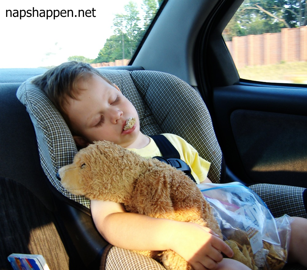 Guest Napper #205: Beary Delicious